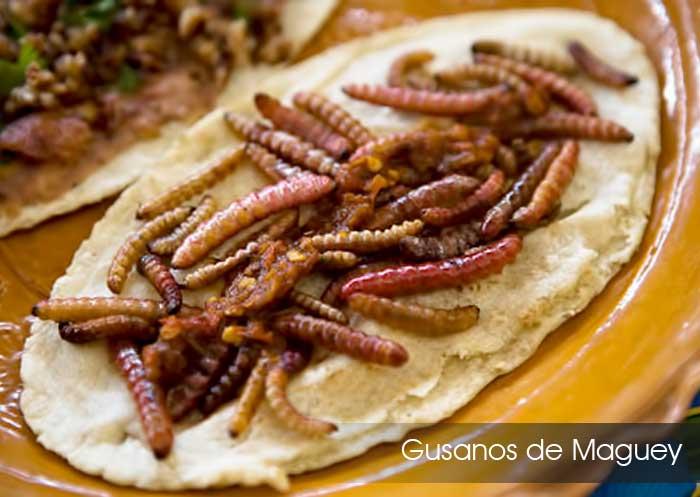 Platillos t picos teotihuacan for Gusanos blancos en la cocina